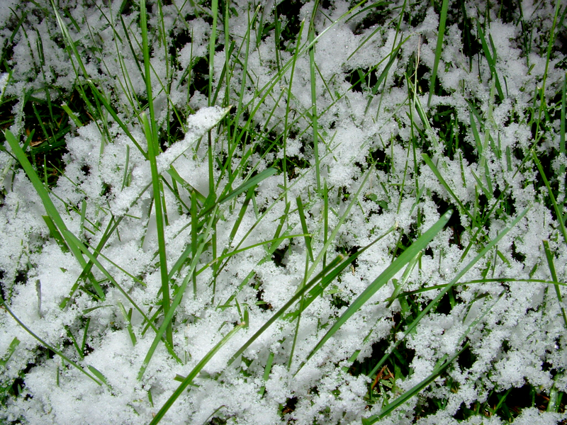 snow on grass, closeup