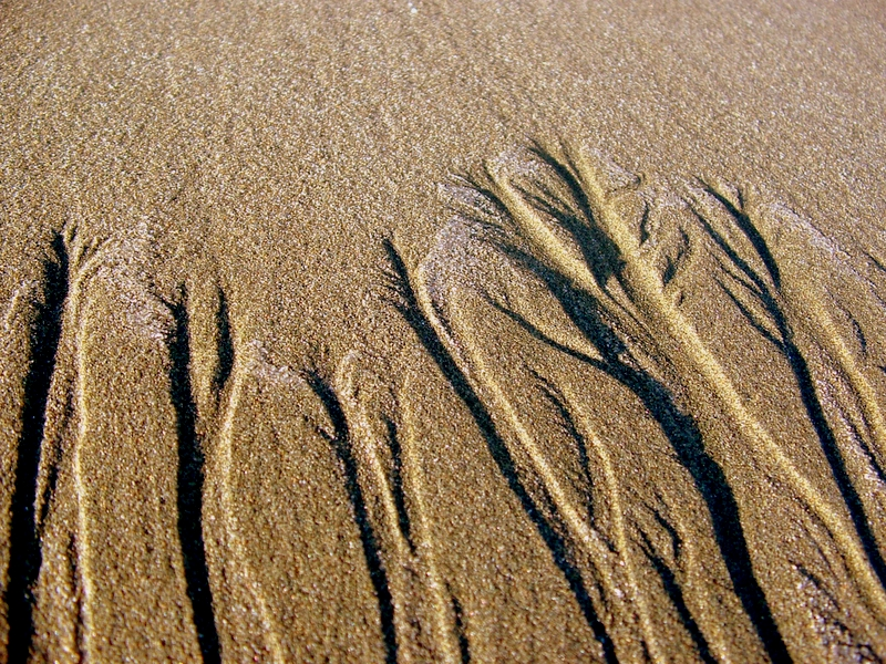 Rivulets of water cause finger-like formations in sand.