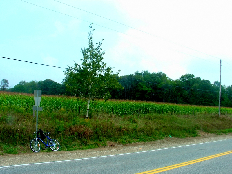 A summery day with a bicycle, signpost, tree and field